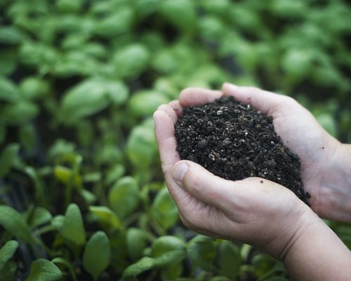 bioplastic news: all our plastic is compostable