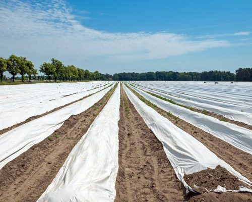 compostable agricultural film